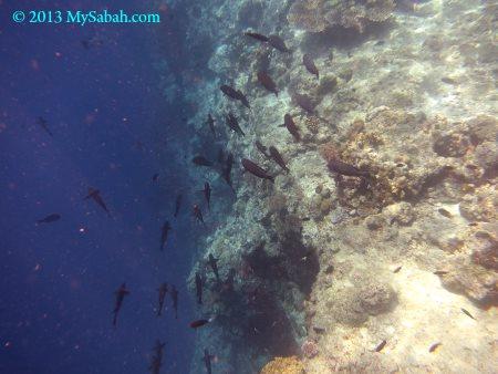 underwater world of Sipadan