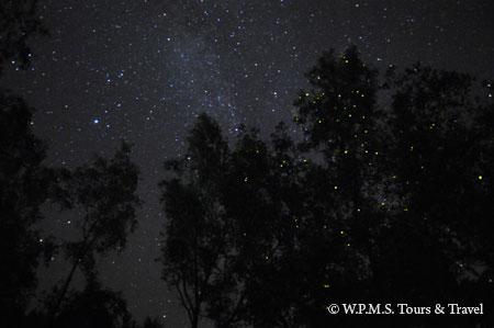 fireflies on the trees