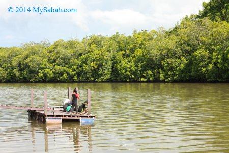 fishing in mangrove