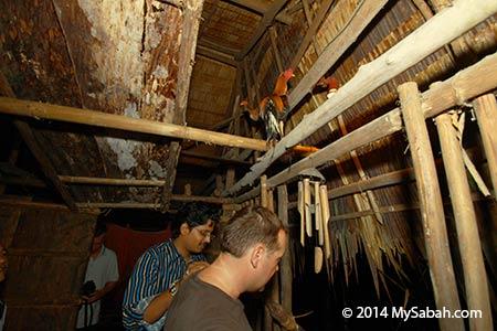 chicken in longhouse
