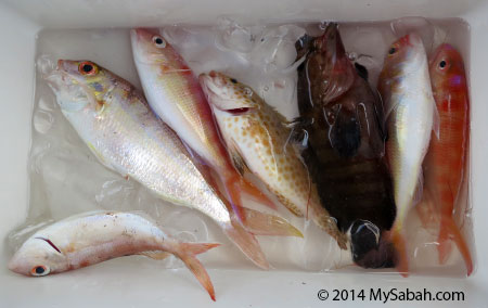 our caught in fishing trip