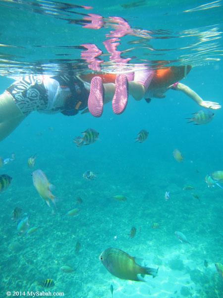 snorkeling in the sea of Mengalum Island
