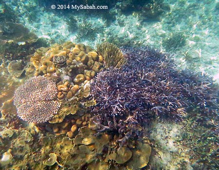 corals in good condition
