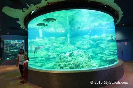 huge fish tank