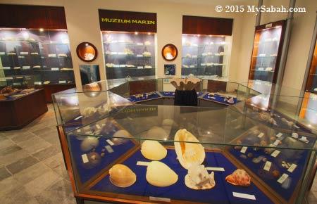hard corals and seashells exhibition