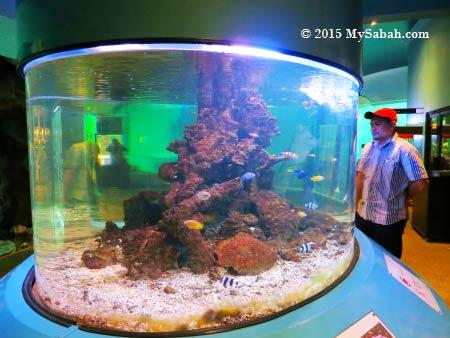 oval fish tank