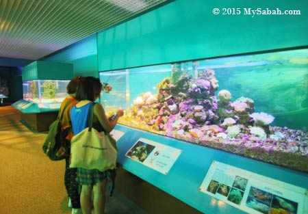 big fish tanks with fishes and corals