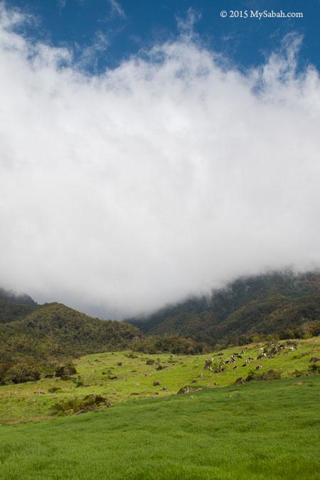grassland of Mesilau