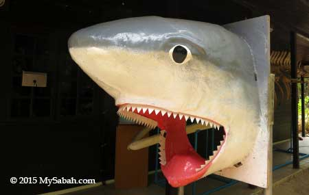shark head photo booth