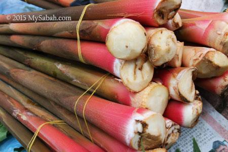 stems of Tuhau for sale