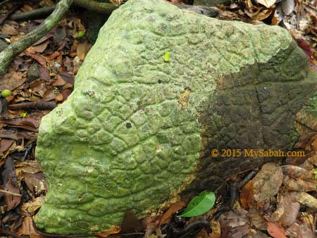 volcanic rock of Bohey Dulang