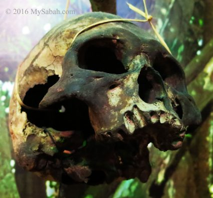 An old skull belongs to a headhunter (now kept by Sabah Museum)