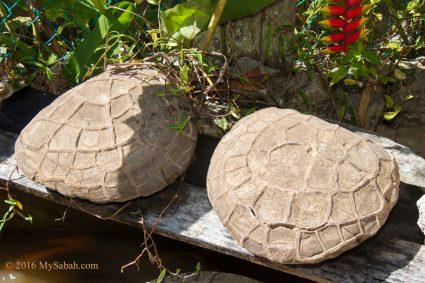 Turtle Rocks