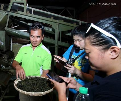 Visiting Sabah Tea Factory