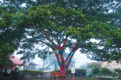 Coloured Tree of Sabah Tea