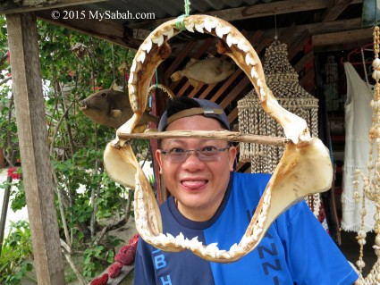 Shark jaws for sale