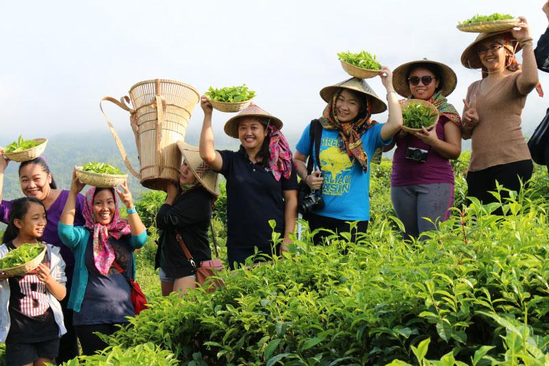 Sabah Tea Garden