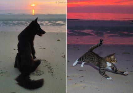 Dog and cat enjoying sunset