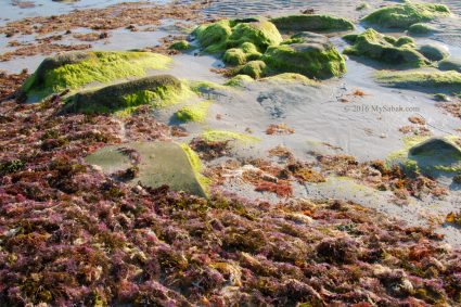 Mossy rocks and seaweed on the beach