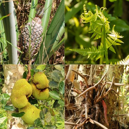 Variety of edible plant and fruits
