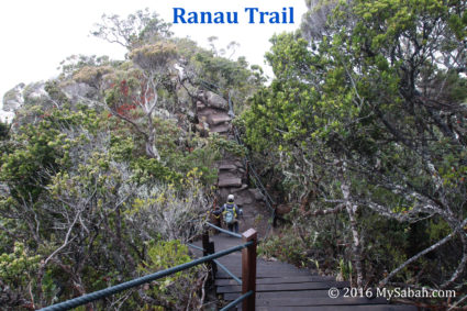 Ranau Trail is flanked by dense vegetation