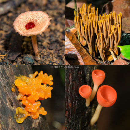 Different type of fungi in Serinsim Park