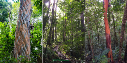 Beautiful trees and rainforest