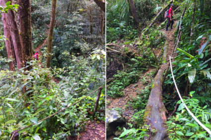 Steep gravel trail