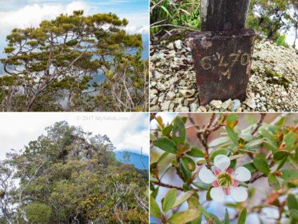 Upper Left: pine tree on the peak, Upper Right: marker of ending point, Lower Left: highest point, Lower Right: Sayat-Sayat flower