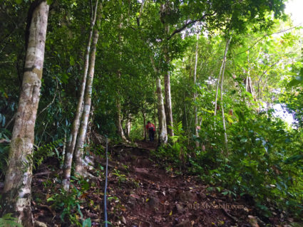 Walking in mixed hill dipterocarp and lowland rainforest
