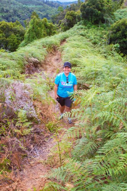 The fern path on Bukit Lugas
