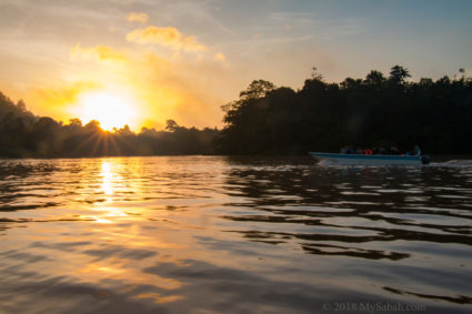 Sunset river cruise at Kinabatangan River