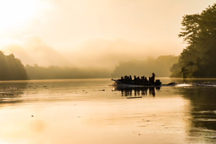Misty morning of Kinabatangan River