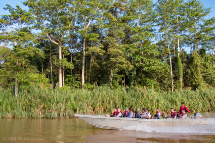 River cruise is the best way for wildlife sighting at Kinabatangan