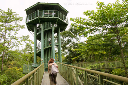 Canopy walkway of Rainforest Discovery Centre