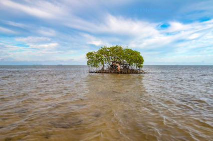 Little mangrove island