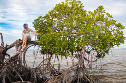 model on mangrove tree