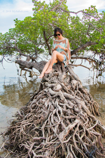 This mangrove tree looks like bonsai