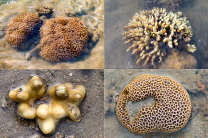 Variety of corals exposed during low tide