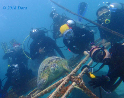 Group photo of divers with the friendly turtle