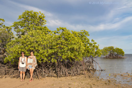 Mangrove trees on Libaran