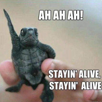 Baby turtle staying alive