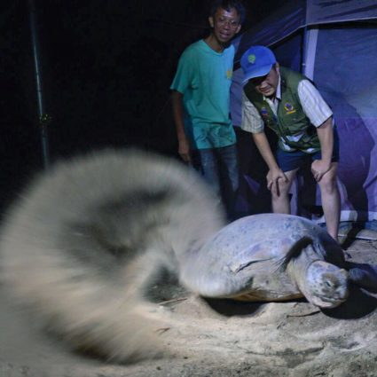 Turtle laying eggs on Libaran